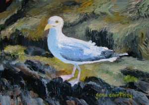 Bay Point Gull