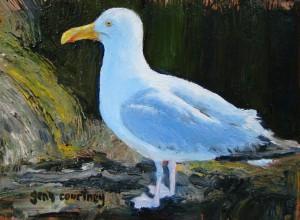 "My Maine Gull, oil on copper, 4"" x 6 '"