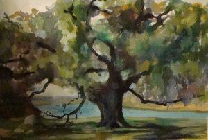 Cumberland Island Live Oak, acrylic on canvas, 19 x 24